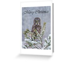 Great Gray Owl Christmas Card 1 Greeting Card