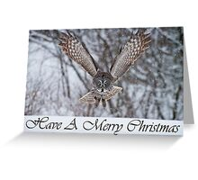 Great Gray Owl Christmas Card 3 Greeting Card