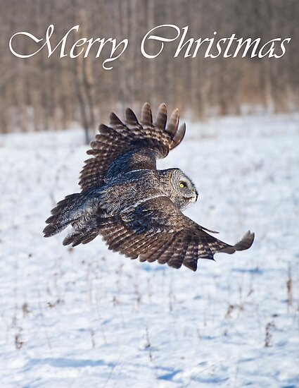 Great Gray Owl Christmas Card 4 by Michael Cummings