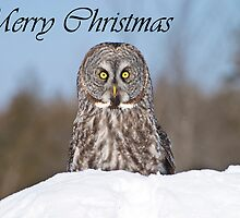 Great Gray Owl Christmas Card 5 by Michael Cummings