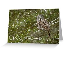 Great Gray Owl Christmas Card 9 Greeting Card