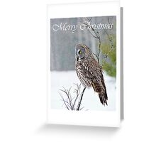 Great Gray Owl Christmas Card 12 Greeting Card