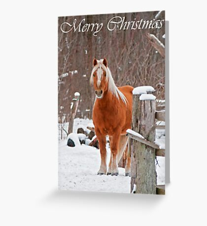 Horse Christmas Card 1 Greeting Card