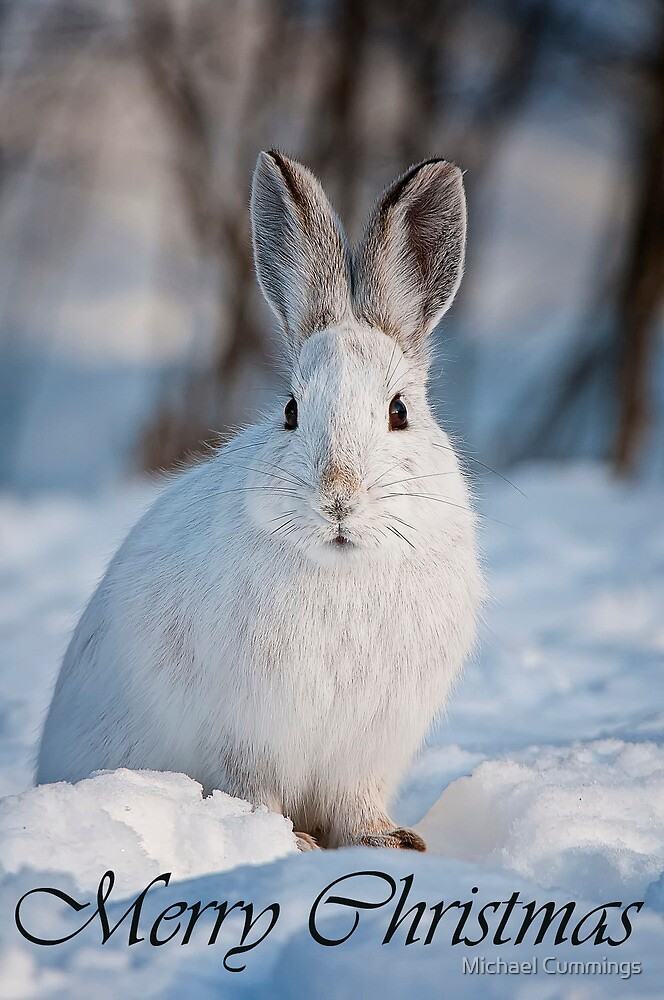 Snowshoe Hare Christmas Card 5 by Michael Cummings