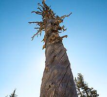 Twisting Tree by studiojanney