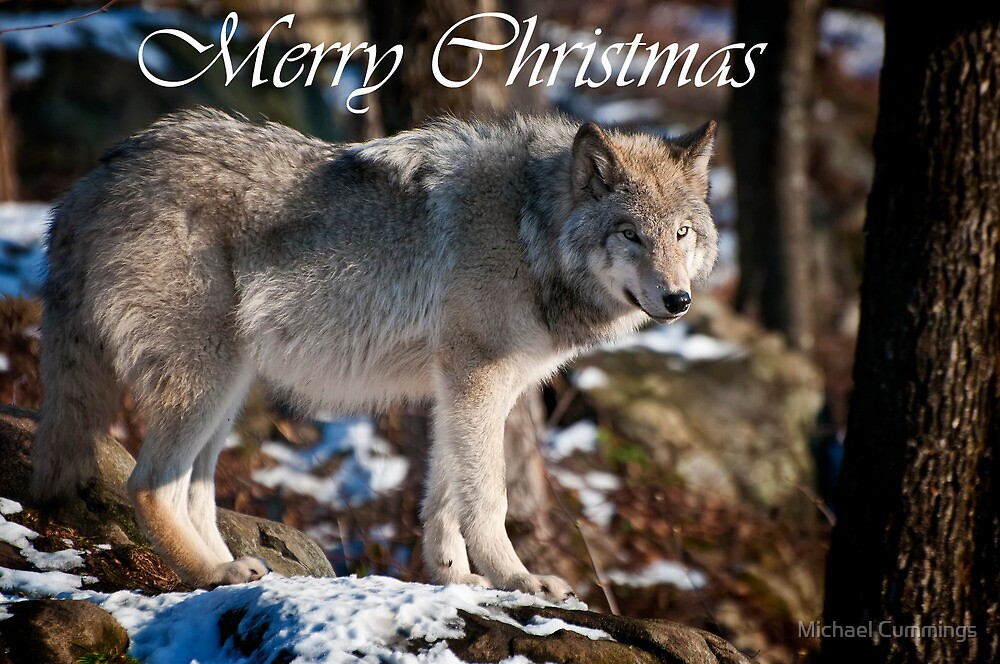 Timber Wolf Christmas Card 1 by Michael Cummings