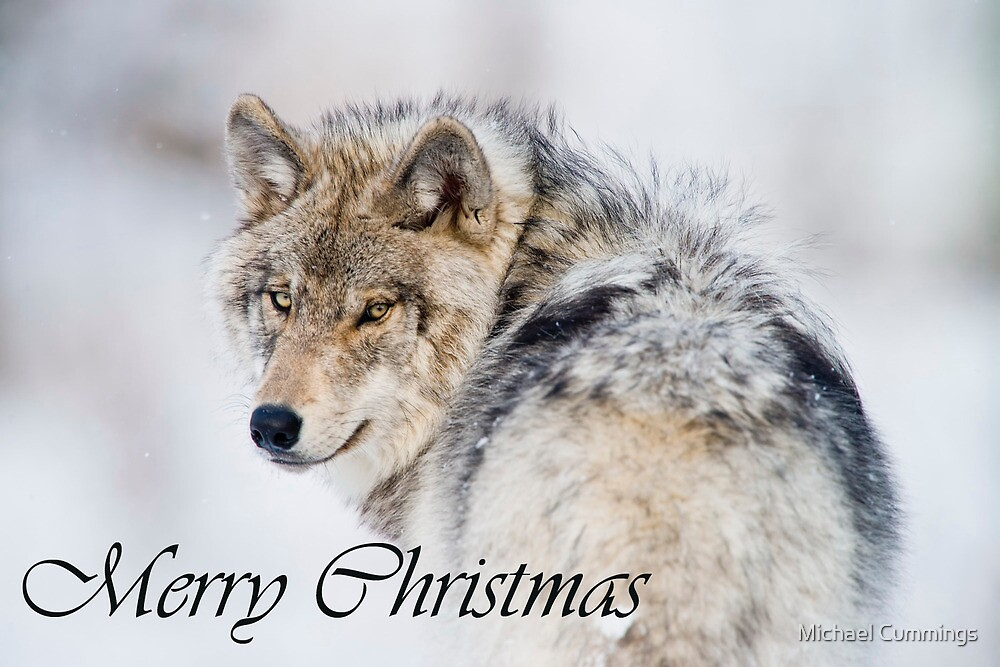 Timber Wolf Christmas Card 2 by Michael Cummings