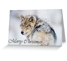 Timber Wolf Christmas Card 2 Greeting Card