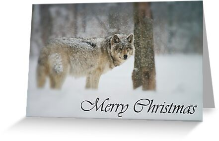Timber Wolf Christmas Card 5 by Michael Cummings