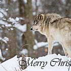 Timber Wolf Christmas Card 6 by Michael Cummings