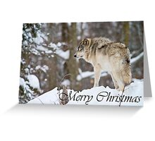 Timber Wolf Christmas Card 6 Greeting Card