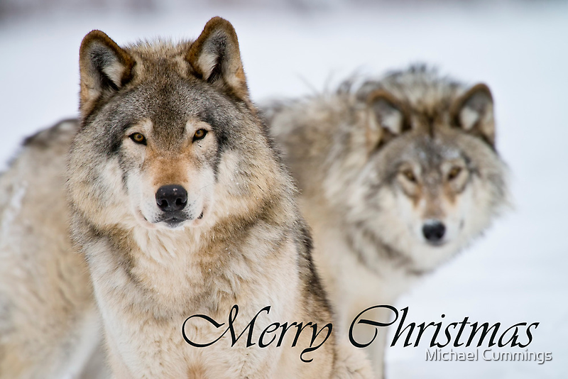 Timber Wolf Christmas Card 7 by Michael Cummings