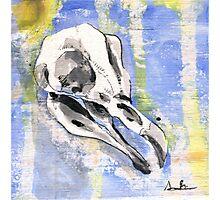 Penguin Skull Photographic Print
