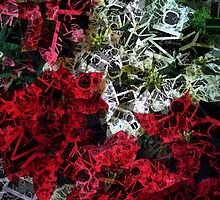 Mixed color Poinsettias 1 Letters 2 by Christopher Johnson