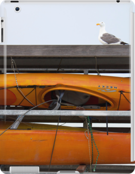Seagull and Kayaks at A T and T Park San Francisco by studiojanney