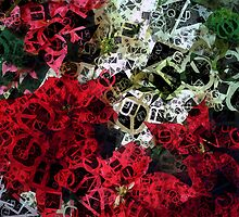 Mixed color Poinsettias 1 Letters 4 by Christopher Johnson