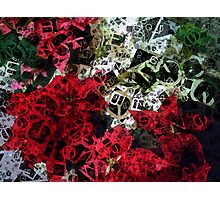 Mixed color Poinsettias 1 Letters 4 Photographic Print