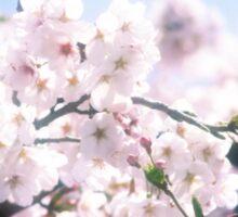 Lovely White Sakura Cherry Blossoms Spring Flowers Sticker