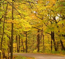 Autumn Drive in the Park by lorilee