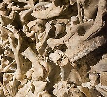 Bones with Teeth in Center in Red by studiojanney
