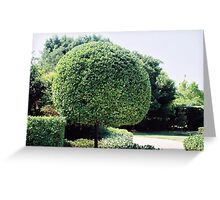 a fine work of topiary Greeting Card