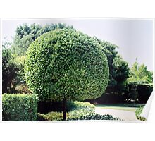 a fine work of topiary Poster