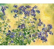 Flowers in the Garden Photographic Print