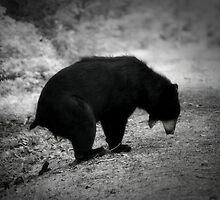 Bear Poop by Darren Quarin