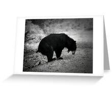 Bear Poop Greeting Card