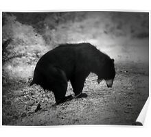 Bear Poop Poster