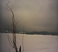 Willow idle in winter by Marina Kropec