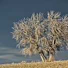 Waiting For Winter On The Colorado Plains by Gregory J Summers