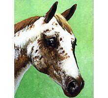 Appaloosa Headshot Horse Photographic Print