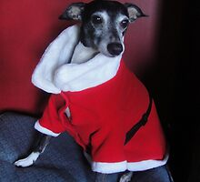 Holiday Hound by CWCards2013