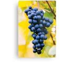 red wine grapes Metal Print