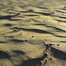 Sun-Kissed Striated Seaside Sand by M-EK