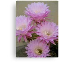 Cactus Blossoms In Bloom Canvas Print