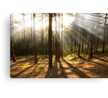 Sunset through the trees Canvas Print