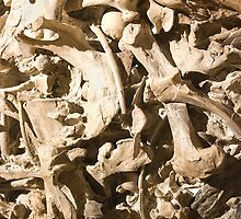 Bones with Skull on Top by studiojanney