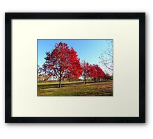 Autumn Parade of Trees Framed Print