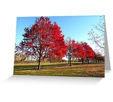 Autumn Parade of Trees Greeting Card