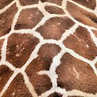 Giraffe Abstract by Deborah Downes