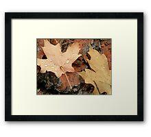 Leaf drops Framed Print