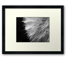 Feathery Framed Print