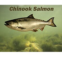 Chinook Salmon Photographic Print