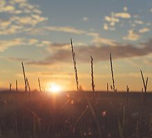 summer sunset by Janice Squires