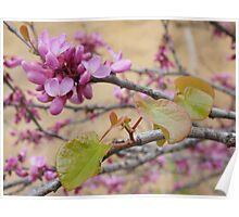 Elegant Magnolia Blossom Tree Poster