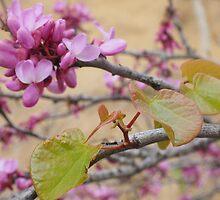 Elegant Magnolia Blossom Tree by Lucie Rovná