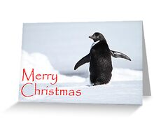 Merry Christmas from Antarctica Greeting Card