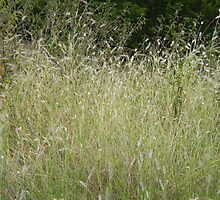 Grass Thicket by Navigator